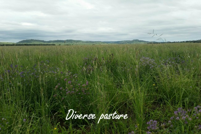 diverse pasture low res with words