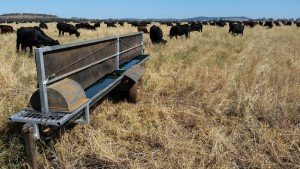 trough on plain with cows